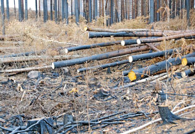 Mellanskog börjar avverka brandskadat timmer. Bilden är från ett annat tillfälle.