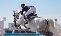Lagkrav kan stoppa hästutbildning