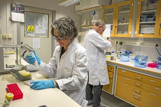 Sex forskare jobbar i Crop Tailors labb. Här pipetterar Alfia Khairullina preparat.