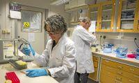 Forskare i Lund först med att kartlägga havrens genom
