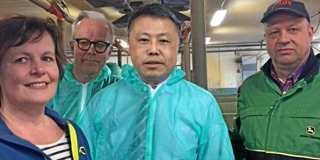 Kineser imponerade av svensk grisproduktion