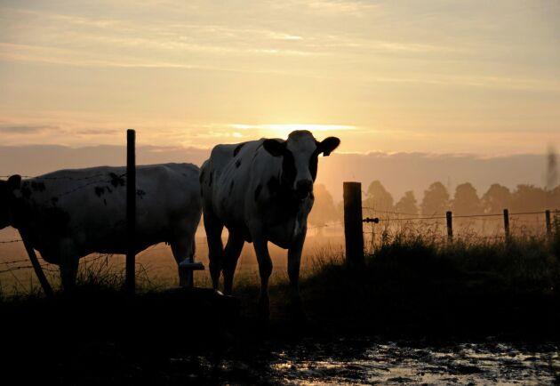 Djurrättsaktivisterna har ändrat strategi. Nu kan vilken uppfödare eller mjölkbonde som helst bli måltavla för manifestationer.