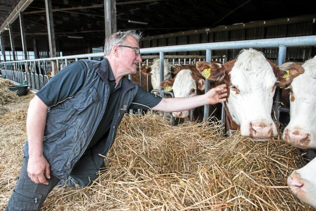 Idag finns det 180 djur av raserna Aberdeen Angus och Hereford på gården.