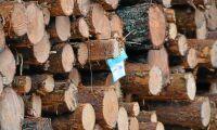 Motigt för Mellanskog