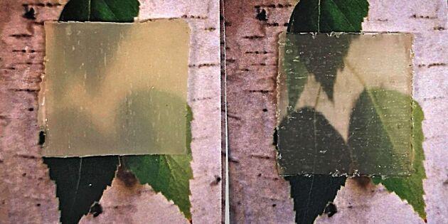 Genomskinligt trä kan reglera värme