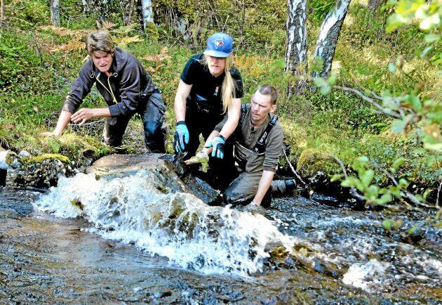 Daniel Bergdahl, vattenvårdshandläggare på Länsstyrelsen Örebro, har inga problem med att ta hjälp av frivilliga krafter i länsstyrelsens vattenvårdsarbete. Bilderna är tagna i Fräsebäcken i september 2014.