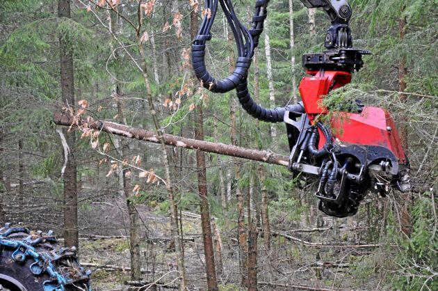 Aggregatet tar stammar upp till 60 centimeter, men så tjocka träd blir för tunga för maskinen, enligt Bo Hagström.
