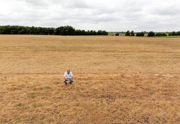 Ordförande för Spannmålsodlarna, Johan Karlzén, är en av många som fått se sina marker bli brunbrända i torkan.