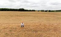 Lantbruket kämpar mot torkan