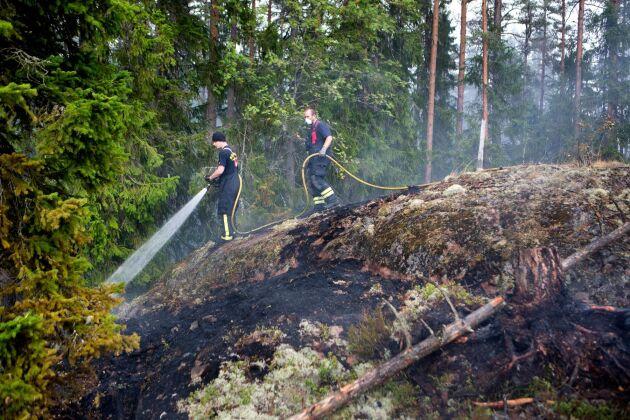 Brandmän kämpar under skogsbranden i Västmanland 2014.