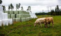 Dyrare att köpa balplast – och att återvinna den