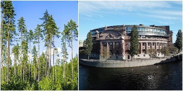 Skogen het fråga i riksdagsutfrågning