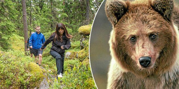 Ny metod att bota björnrädsla – gå ut i björnskogen!