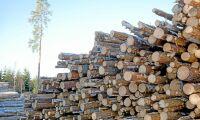 Klimatkraven på skogen fortsatt stridsfråga
