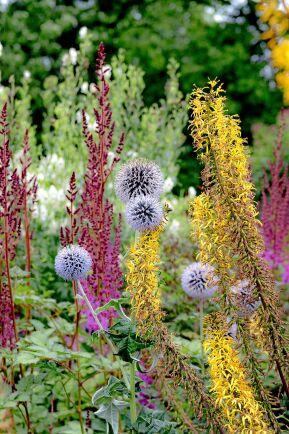 Blå bolltistel 'Taplow Blue' och spirstånds är två insektsfavoriter med blomställningarna som kontrasterar varandra i både färg och form.