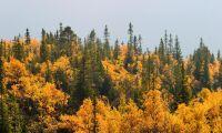 Köpte skog för 1,6 miljoner – får inte avverka