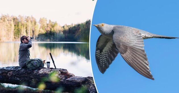 Gör en mysig gökotta – ät frukost ute i skogen och spana efter vårens fåglar.