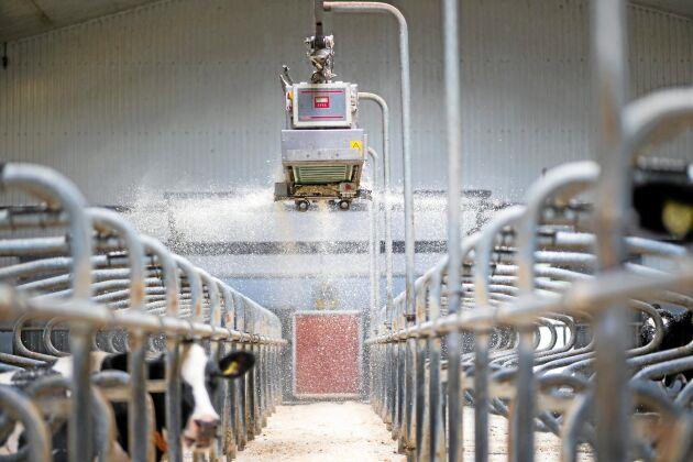"""I taket. Själva roboten är batteridriven och laddar när den står stilla. Just vid robotmjölkning har den särskilda fördelar. """"Den stör ju inte kotrafiken"""", säger Henrik Stenström på Berte gård."""