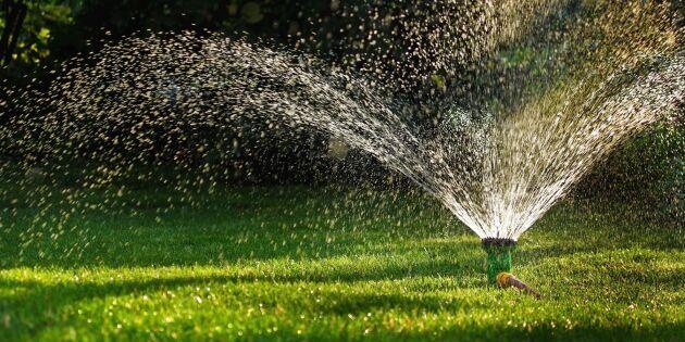 Bevattningsförbud i 13 kommuner – och fler uppmanar till sparsamhet