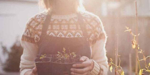 Slöa mera! Fem saker du INTE ska göra i trädgården i vår