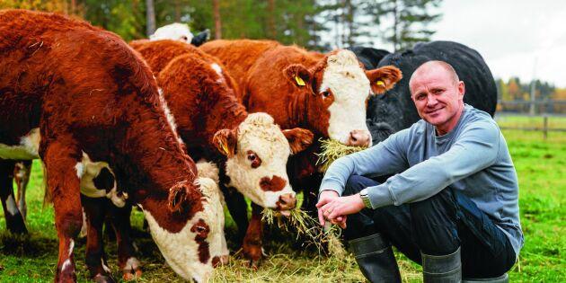 Gullsjö lantbruk: Hemligheten sitter i gräset