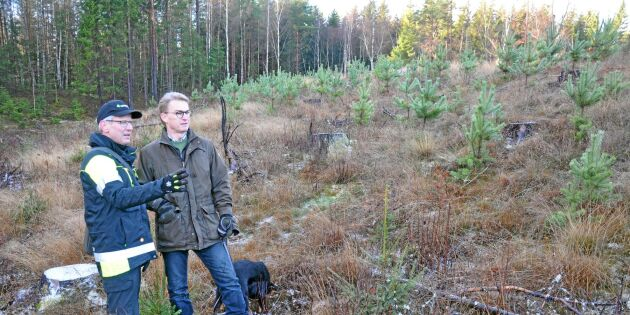 Plantera rätt träd på rätt plats