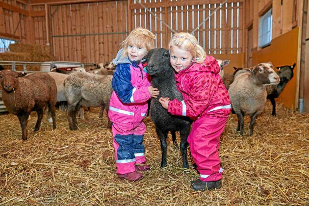 Kramdjur. Värmlandsfåret Ayla får både dubbelkram och pussar på öronen av Julie och Lovisa.