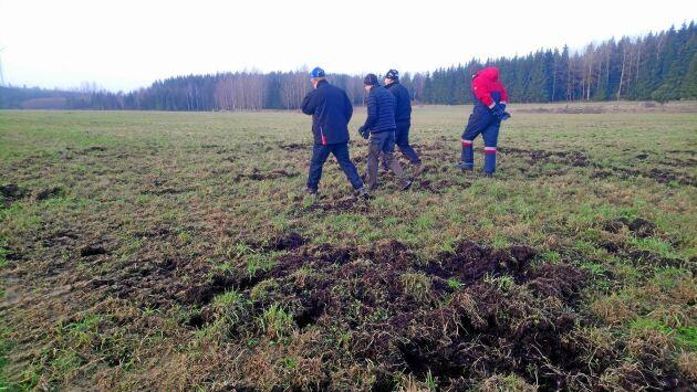 Innovationsgruppen för projektet Vildsvinsstopp besöker en vildsvinsskadad åker i Östergötland.