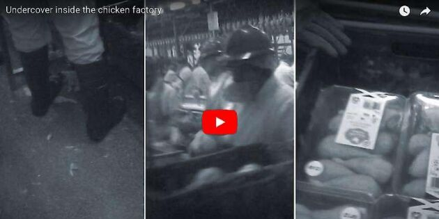 Kycklingproducent stänger skandalanläggning