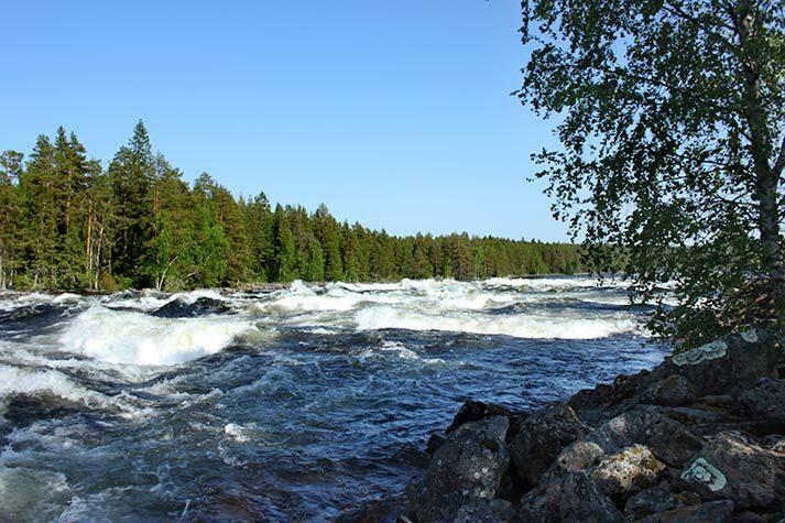 Äkta vattenkraft i de vilda forsarnaorörda Vindelälven. Foto: Visitumea.se