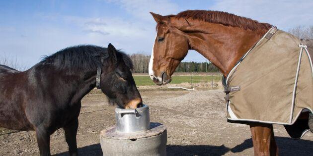"""""""Osakliga angrepp hjälper inte hästnäringen"""""""