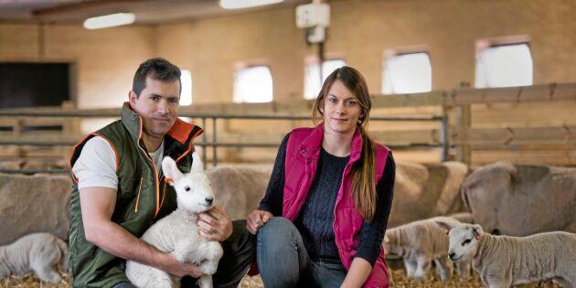 Historien om Tangará Farm – ville revolutionera svensk fårnäring