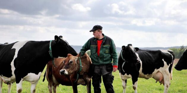 5 saker du borde veta om våra svenska mjölkbönder