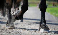 Kondom avslöjade övergrepp mot hästar