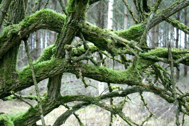 Rödlistade arter är inte alltid hotade. Det visar Skogslands granskning.