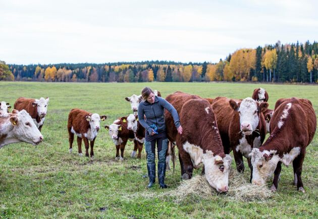 Jenny Preiholt på Rörbo lantbruk i Västmanland är ansluten till Sveriges nötköttsproducenters kontrollprogram för utegångsdjur utan ligghall.