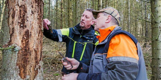 Fruktar 3 miljoner kubikmeter skadad skog
