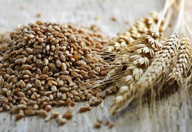 I år har det kommit in fler kvarnar och andra som vill ha spannmål till humankonsumtion i köparleden. Arkivbild.