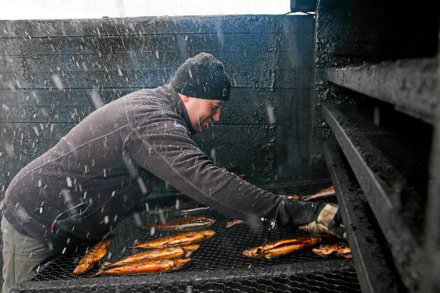 Nicklas köper fisken från fiskare i fjällvärlden och förädlar dem i röken själv.
