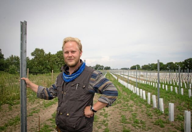 Vinmakaren K Felix G Åhrberg visar upp gårdens nyplanterade vinstockar.