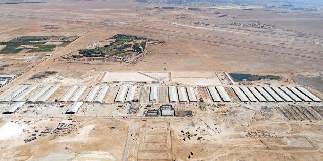 Gigantisk mjölkgård byggs i öknen