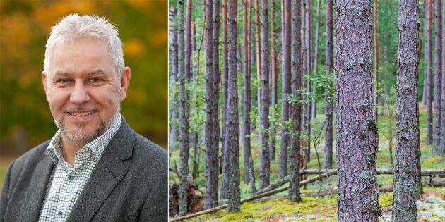 Intresset för att investera i skog är högt