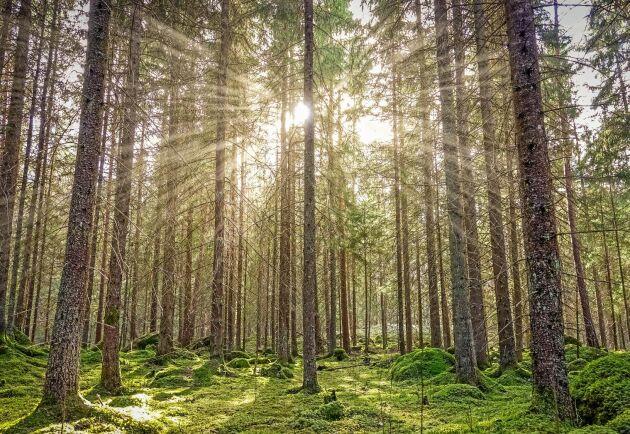 En skogsägare förväntas veta när det finns värdefull skog på hans eller hennes mark.