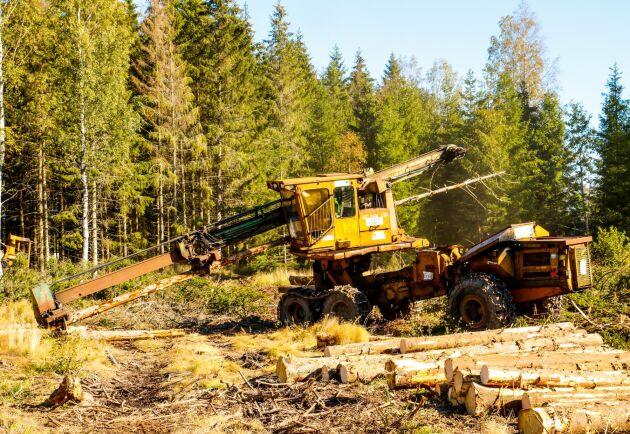 Helgum Logman tar de fällda träden och kvistar och kapar.