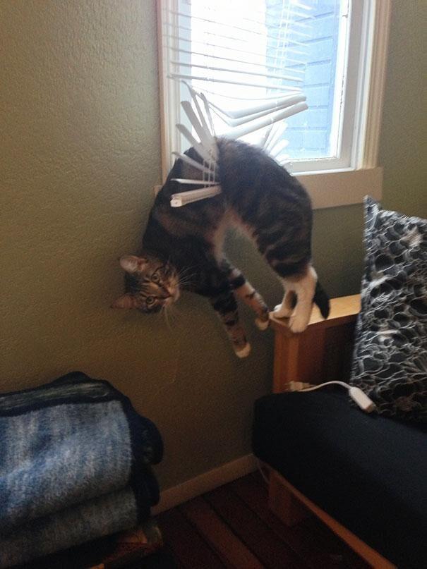 katt01