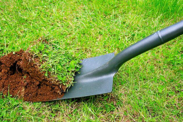 Mer äng, mindre matta. Gör en sommarblomsmix och lägg på vända jordtorvor.