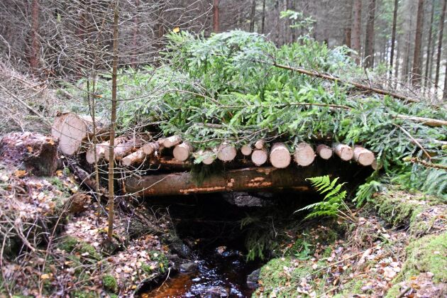 En bro byggs för att skona den lilla bäcken.