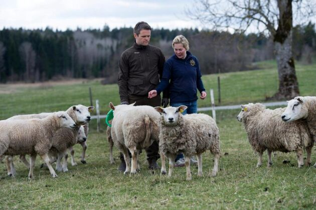 Johan Lundgren och Elisabeth Aschan kommer att överklaga beslutet om skyddsjakt. De vill att samtliga vargar i reviret fälls. Jakten kommer dock att inledas oavsett om någon överklagar.