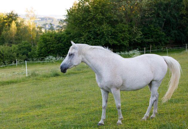 Hästen på bilden har inget med händelsen att göra. Akrivbild.