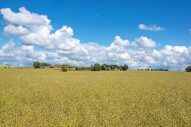 Jordbruksverkets har släppt nya siffror på vad det kostar att arrendera jordbruksmark i landet.